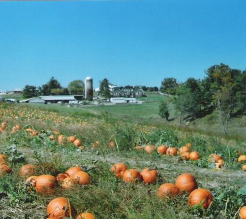 pumpkins-argus-002