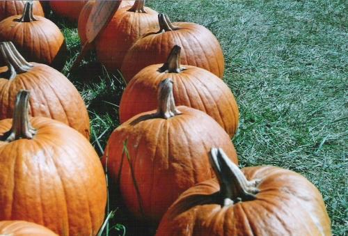pumpkins-argus-004