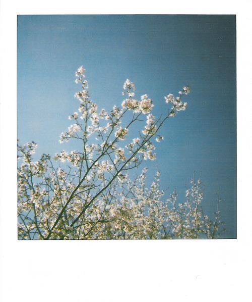 spring-blooms-polaroid-crop